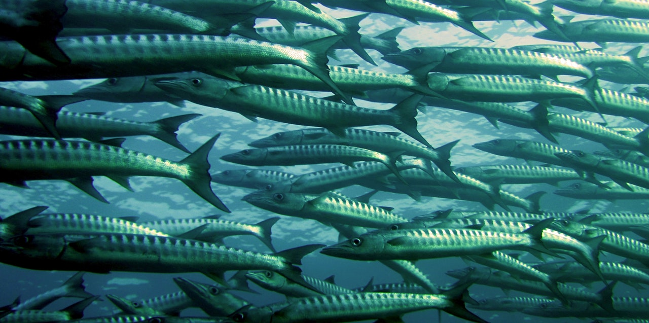 bunch-of-fishes-swimming-in-the-ocean