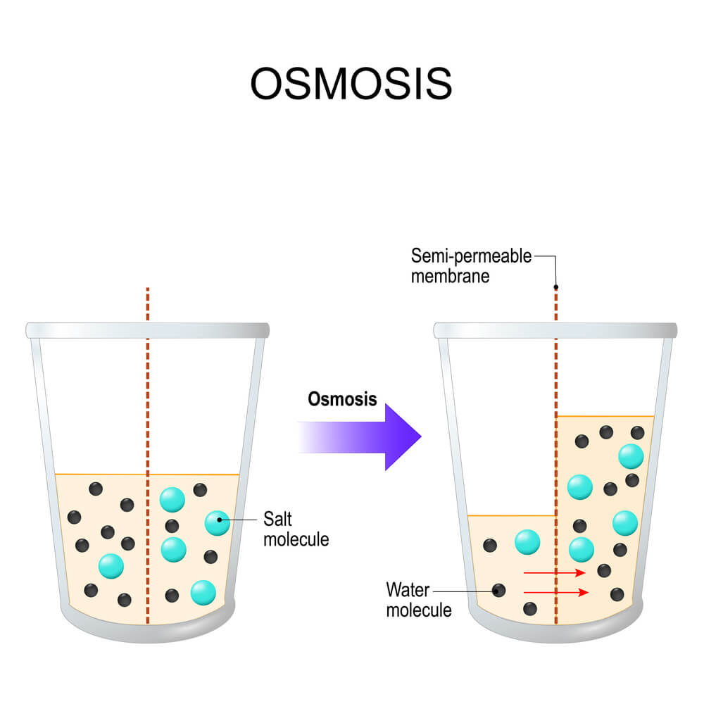 osmotic power in practice